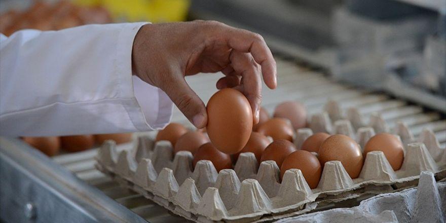 Avrupa'nın Yumurta Krizi Büyüyor