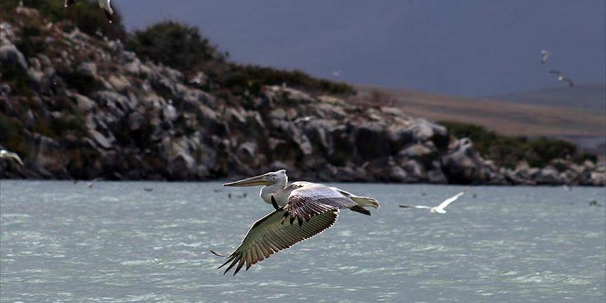 Sınır Tanımayan Pelikanlardan Görsel Şölen
