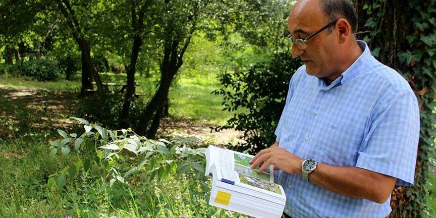 Kentleşmeyle Endemik Bitkiler Yerini 'İstilacı'ya Bıraktı
