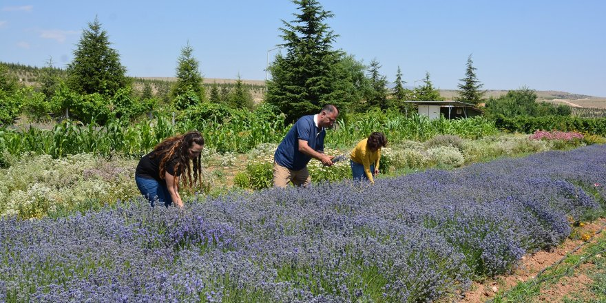 Türkiye'nin ilk Tıbbi Bitkiler Çiftliği, Selçuk'ta