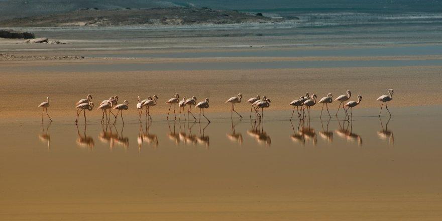 Tuz Gölü'nün ekolojisi korunuyor