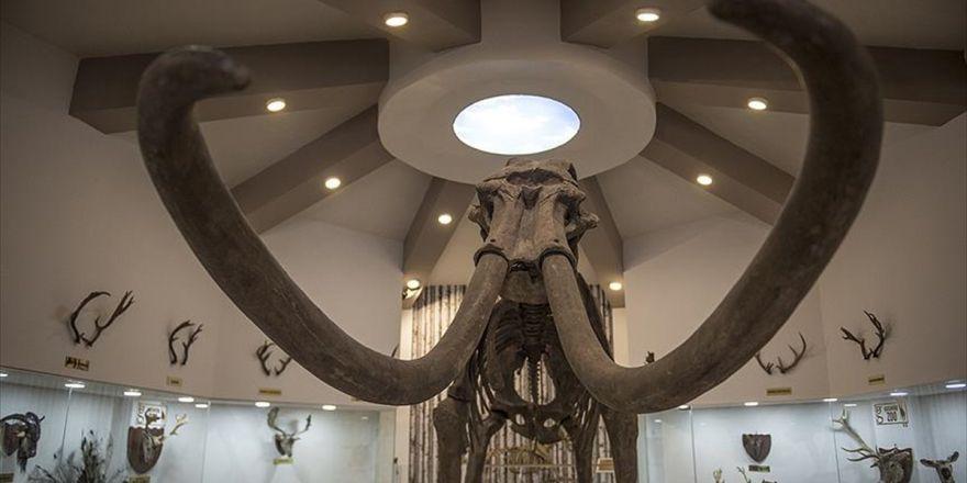 Gaziantep Zooloji Ve Doğa Müzesine İlgi