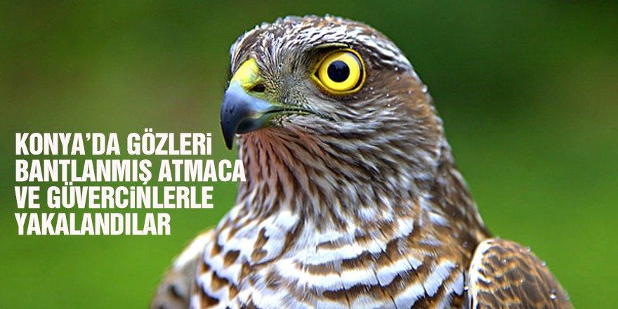 Konya'da gözleri bantlanmış atmaca ve güvercinler bulundu