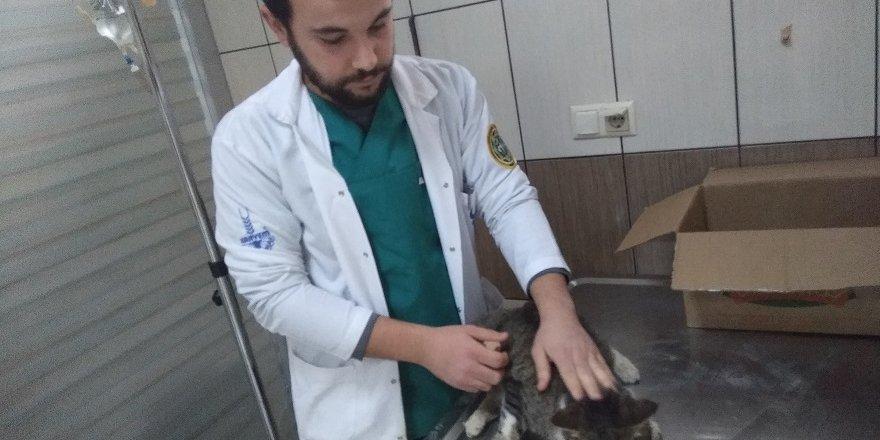 Yaralı Kediye Belediye Sahip Çıktı