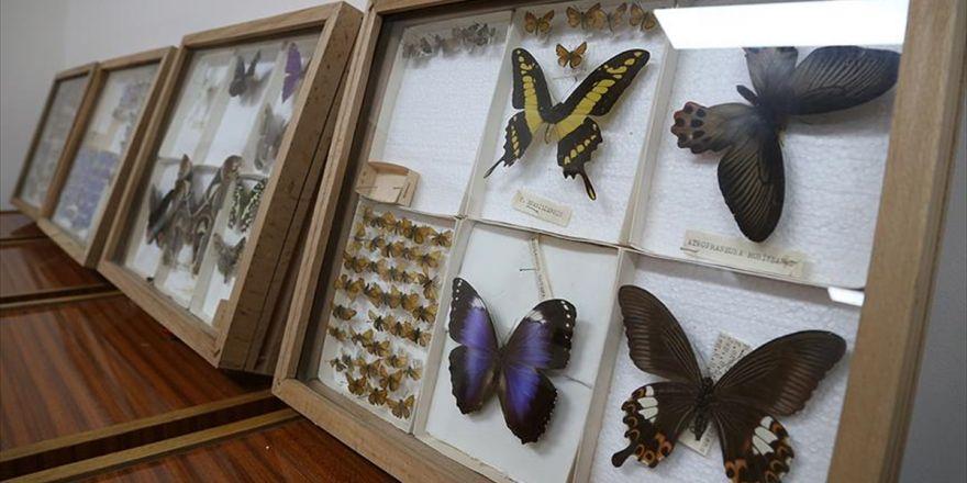 Yarım Asırlık Müze Böcek Bilimine Işık Tutuyor