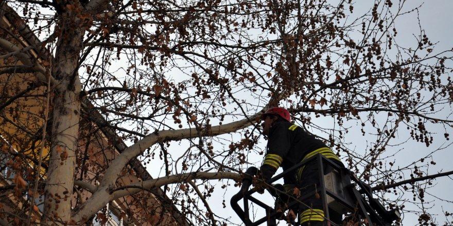 Ağaca Çıkan Sansar İtfaiyeye Zor Anlar Yaşattı