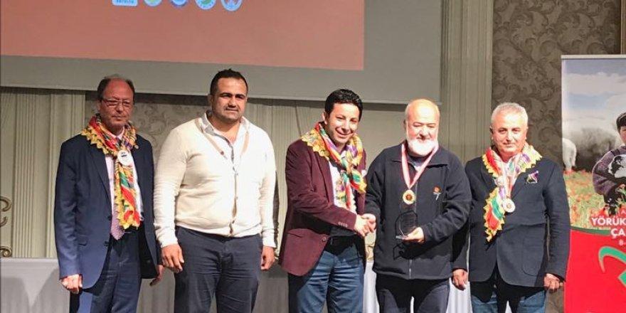 Yörük Türkmen Çalıştayı'nda Özteke'ye altın madalya