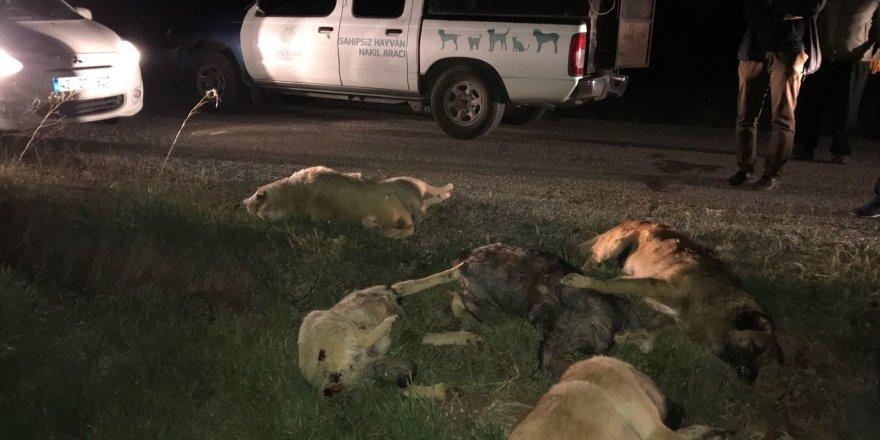Zehirlendiği ileri sürülen 5 köpek bulundu