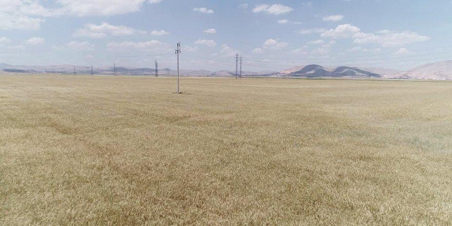 Kırmızı sert buğdayın kilogramı 1,372 liradan işlem gördü