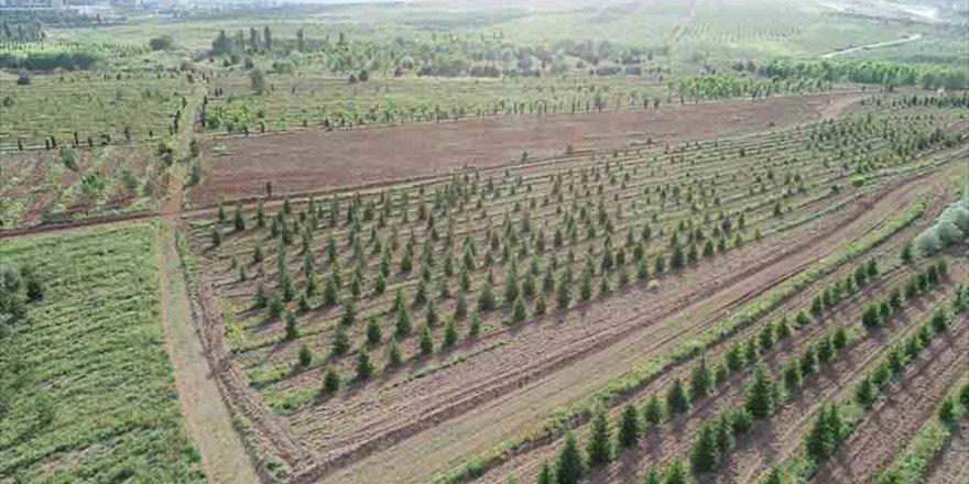 Atatürk Orman Çiftliği İle Orman Genel Müdürlüklerinin Yapısında Düzenleme