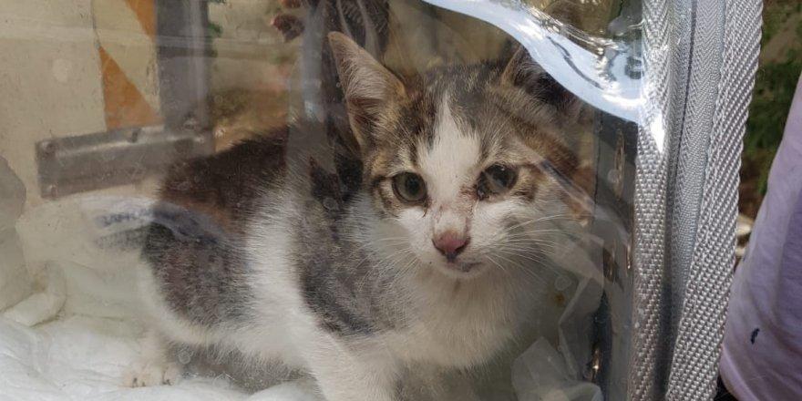 3 gündür kuyuda mahsur kalan kediyi, AFAD kurtardı