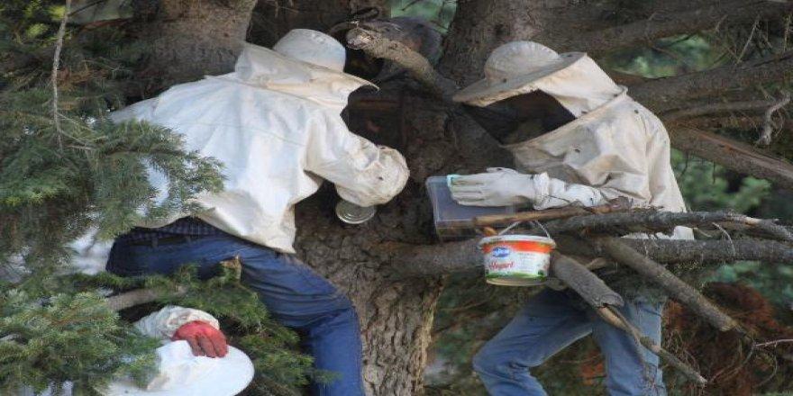 Kilosunu 250 TL'ye sattıkları doğal orman balı geçim kaynakları oldu