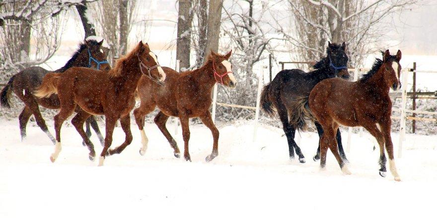 Ereğli'de kış