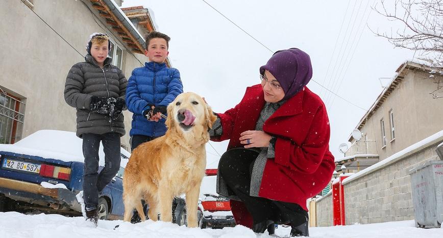 Meram'da sokak hayvanları yalnız değil
