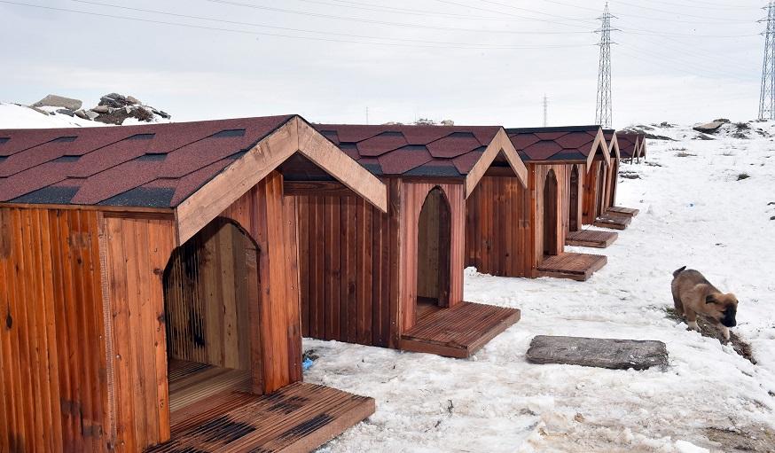 Konya'da sokak köpeklerine sıcak yuva