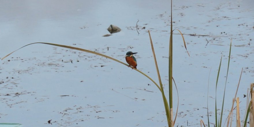 Kuş cennetinde, kış ortası kuş sayım mesaisi sürüyor