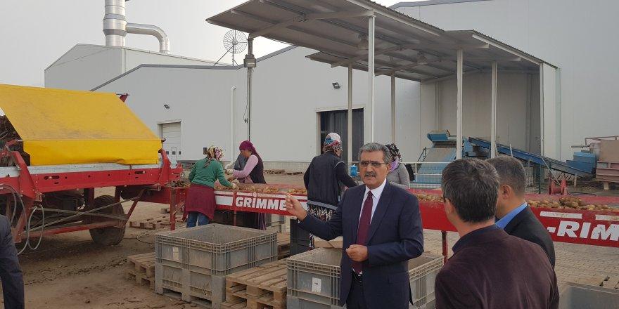 Konya Şeker'in tesisi ile patates üretimi 3'e katlandı