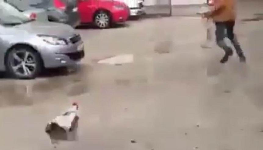 Yanındaki tavuk alınınca çılgına dönen horoz adamı kovaladı