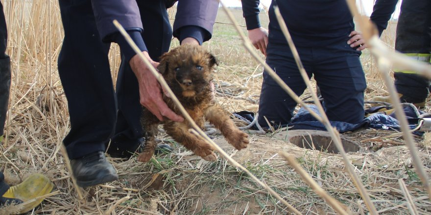 Kuyuya Düşen Yavru Köpeği İtfaiye Kurtardı