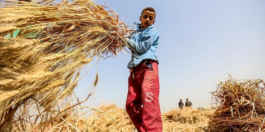 En Fazla Çocuk İşçi Tarım Sektöründe