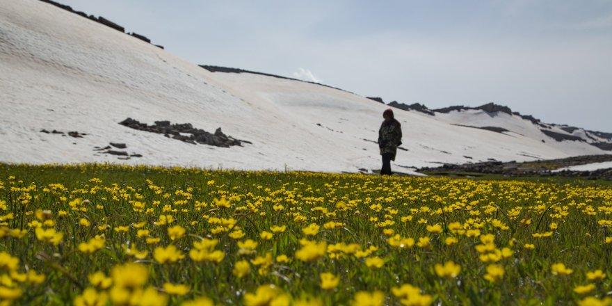 Dağında Kar Eteklerinde Bahar Yaşanıyor