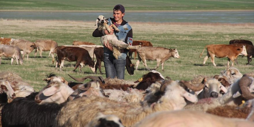 Çobanların Ramazanda Zorlu Mesaisi