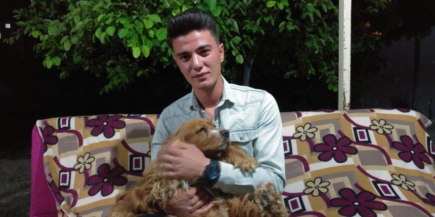 Otomobilin Çarptığı Köpeğini Kalp Masajı İle Hayata Döndürdü