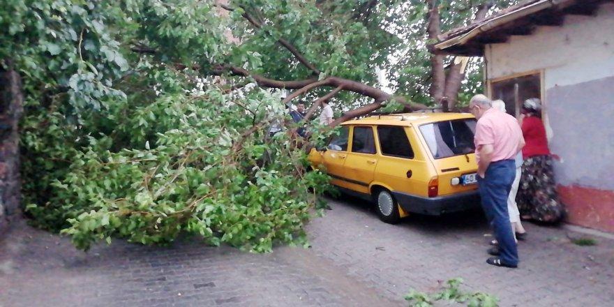 Tokat'ta fırtına çatıları uçurdu, ağaçları devirdi