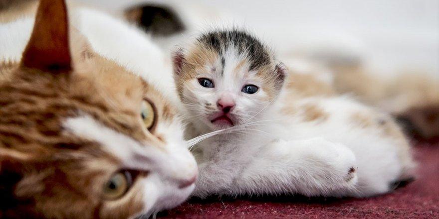 Ofisini 'Anne Adayı' Kedilere Tahsis Etti