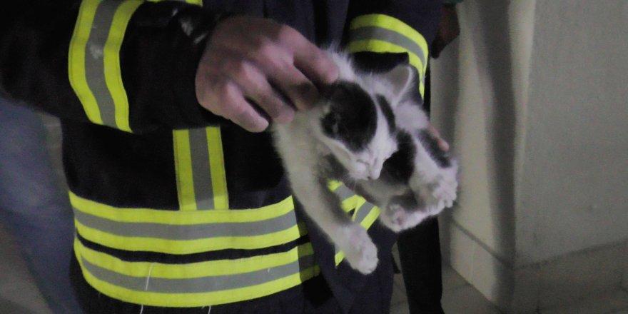 Havalandırma Boşluğuna Düşen Yavru Kediyi İtfaiye Kurtardı