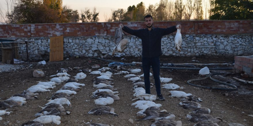 Konya'da 150 Kaz Telef Oldu