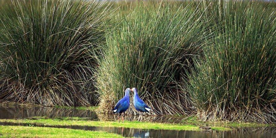 Unesco İçin Kuş Cennetinin Biyoçeşitliliği Ortaya Çıkarılıyor