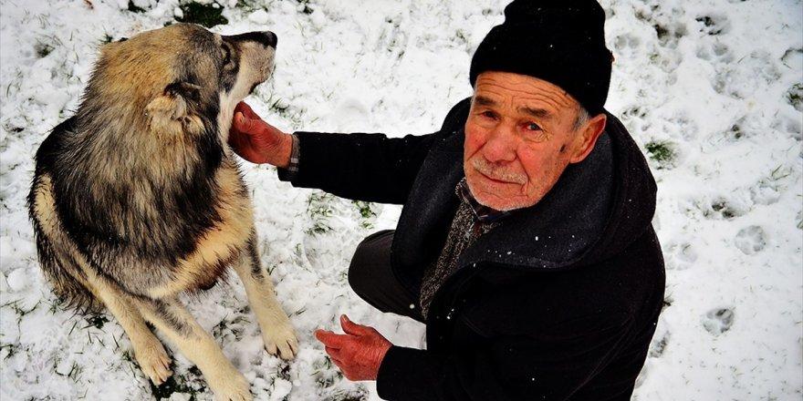 Sahipsiz Köpeklere Şefkatle Bakıyor