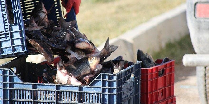 Çin Sazanı Balıkçılar İçin Umut Oldu