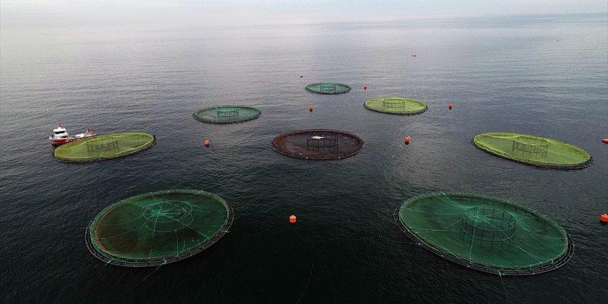 Su Ürünleri İhracatının Yeni Yıldızı: Karadeniz Somonu