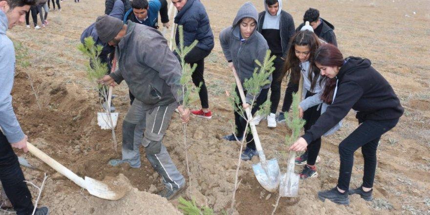 Kulu'da Bin Çam Fidanı Toprakla Buluşturuldu