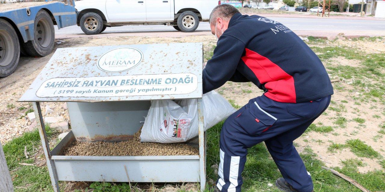 Sokak Hayvanlarına Yiyecek Desteği