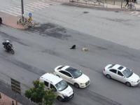 Trafik polisinin sokak köpeği ile imtihanı