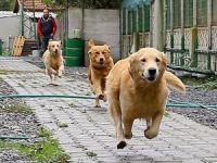 ABD'de 310 köpekli çift gözaltına alındı