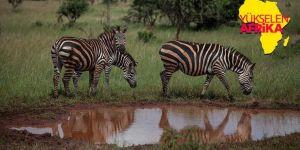 Doğa, vahşi yaşam ve adrenalin: Akagera Milli Parkı