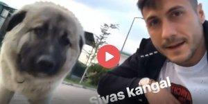 Adis, Anadolu aslanına hayran kaldı (Video Haber)