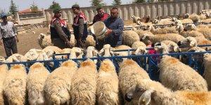 Konya'da Hayvan Hırsızlığı