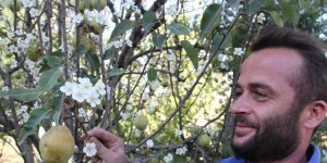 Armut ağacı Eylül'de çiçek açtı