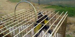 Saka kuşu avcısına bin 654 lira para cezası