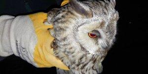 Yaralı bulunan şahin ve hasta puhu kuşu tedavi altına alındı