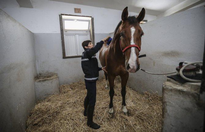 Jandarmanın atları kadın komutana emanet