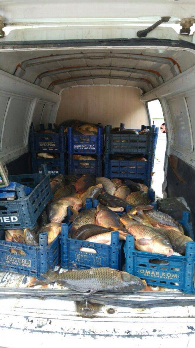 Elazığ'da kaçak balık avcılığı