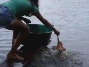 Pirana Balığı Nasıl Yakalanır ?
