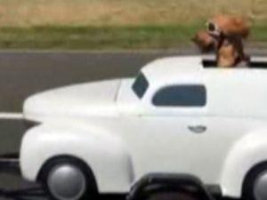 Sevimli köpeğin ilginç seyahati