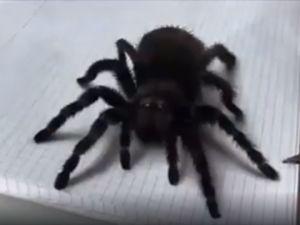 3 Boyutlu Tarantula Çizimi Şaşırtıcı!